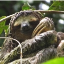 cropped-slothy