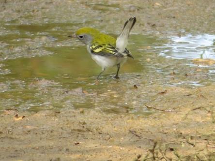 Dyke Marsh Wildlife Preserve, Virginia Fall 2019
